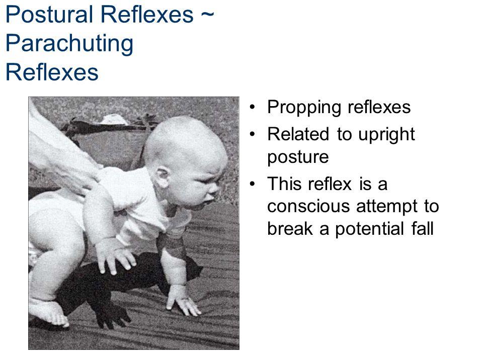 Postural Reflexes ~ Parachuting Reflexes