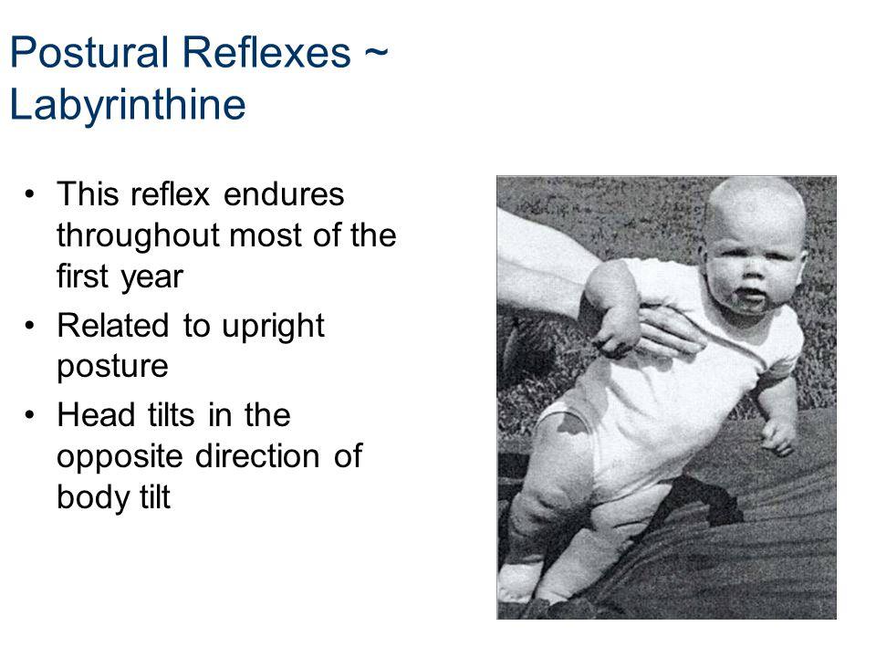 Postural Reflexes ~ Labyrinthine