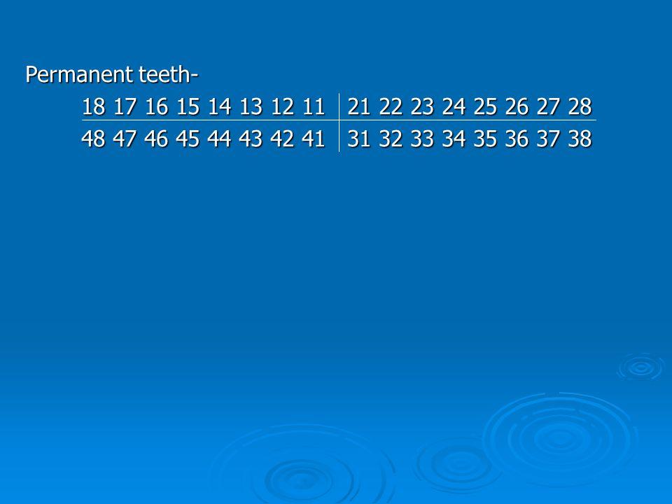 Permanent teeth- 18 17 16 15 14 13 12 11 21 22 23 24 25 26 27 28.