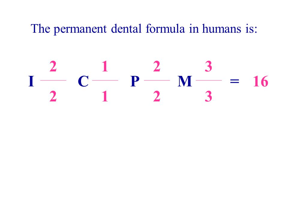 The permanent dental formula in humans is: