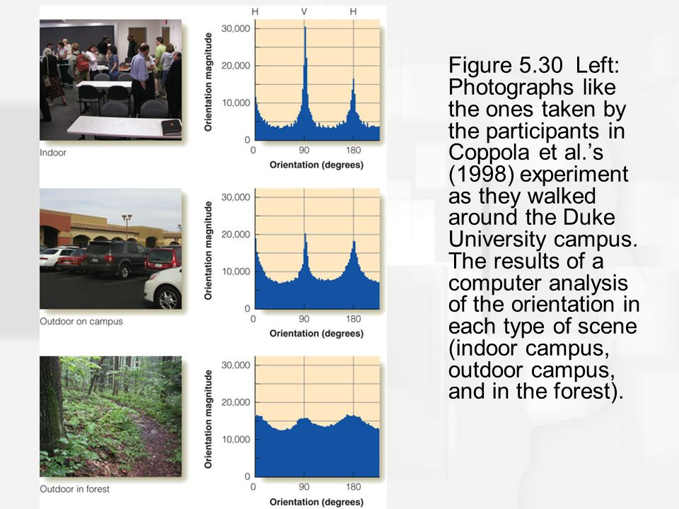 Figure 5.30 Left: Photographs like the ones taken by the participants in Coppola et al.'s (1998) experiment as they walked around the Duke University campus. The results of a computer analysis of the orientation in each type of scene (indoor campus, outdoor campus, and in the forest).