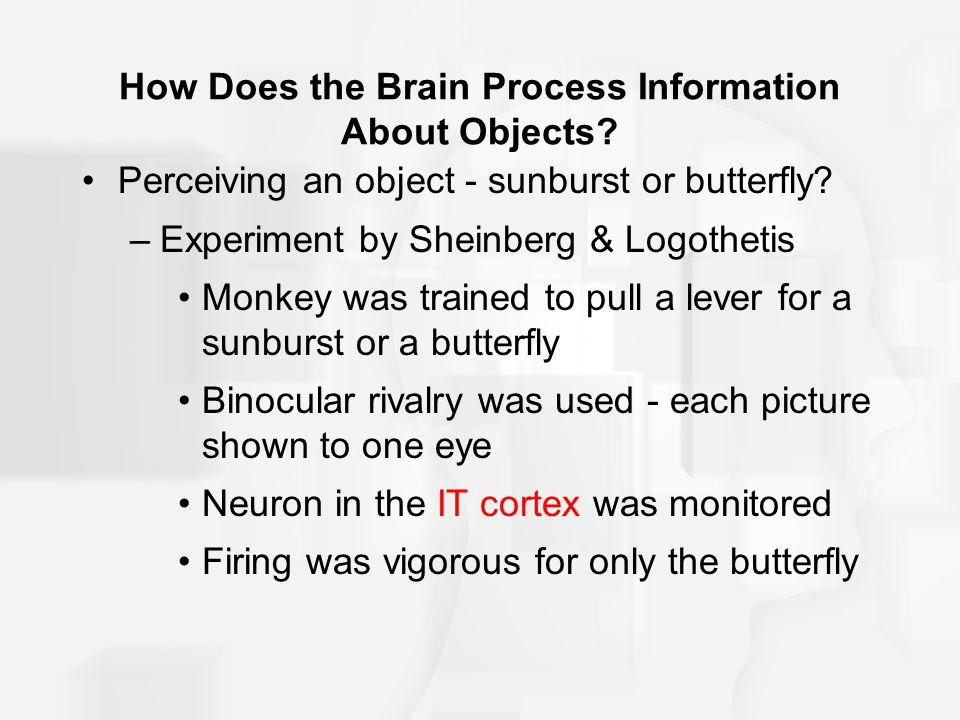 How Does the Brain Process Information About Objects