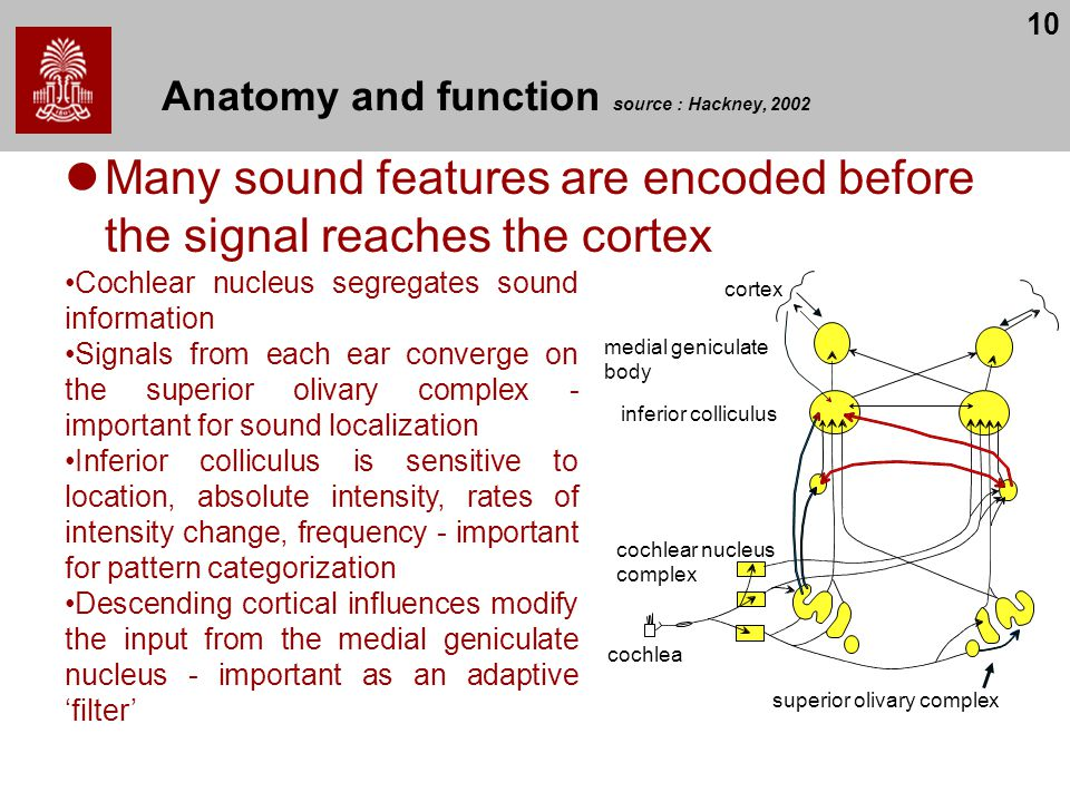 Anatomy and function source : Hackney, 2002