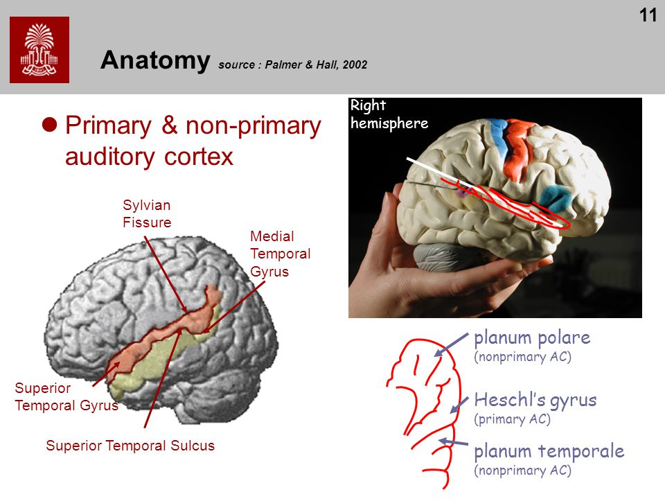 Anatomy source : Palmer & Hall, 2002