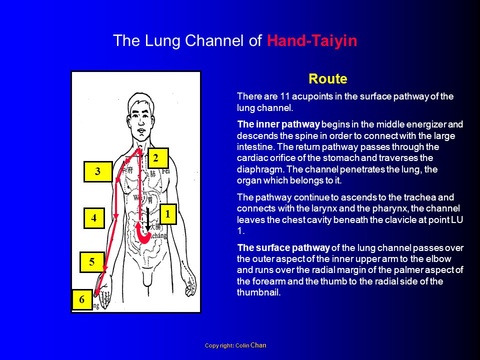 The Lung Channel of Hand-Taiyin