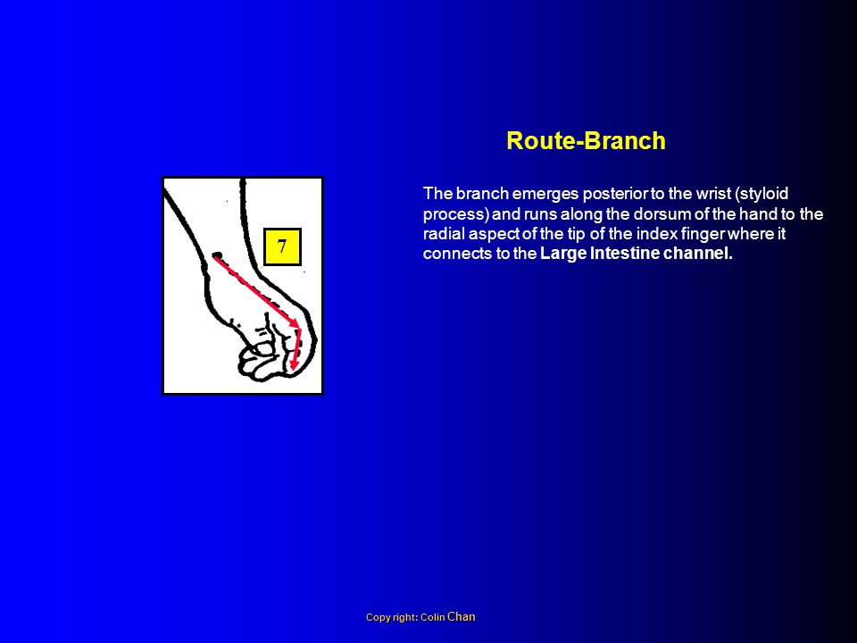 Route-Branch