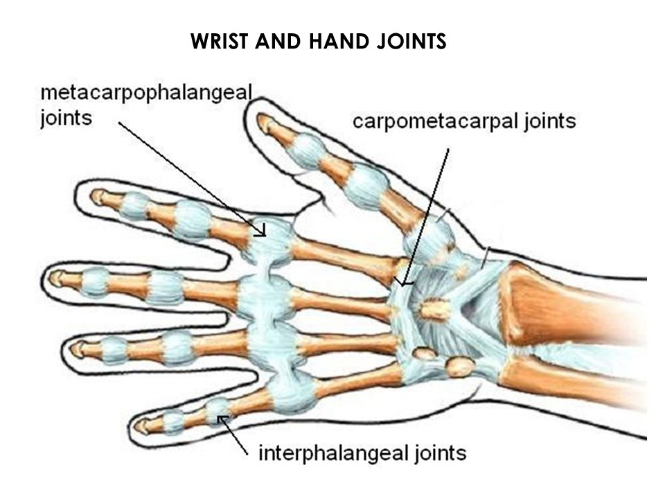 WRIST AND HAND JOINTS