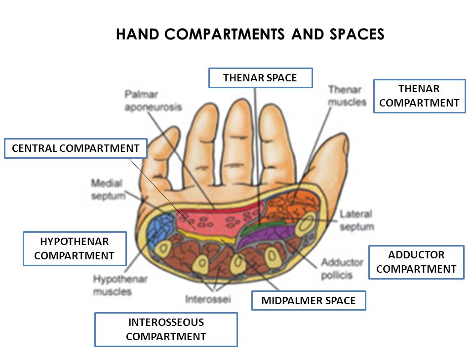 HAND COMPARTMENTS AND SPACES