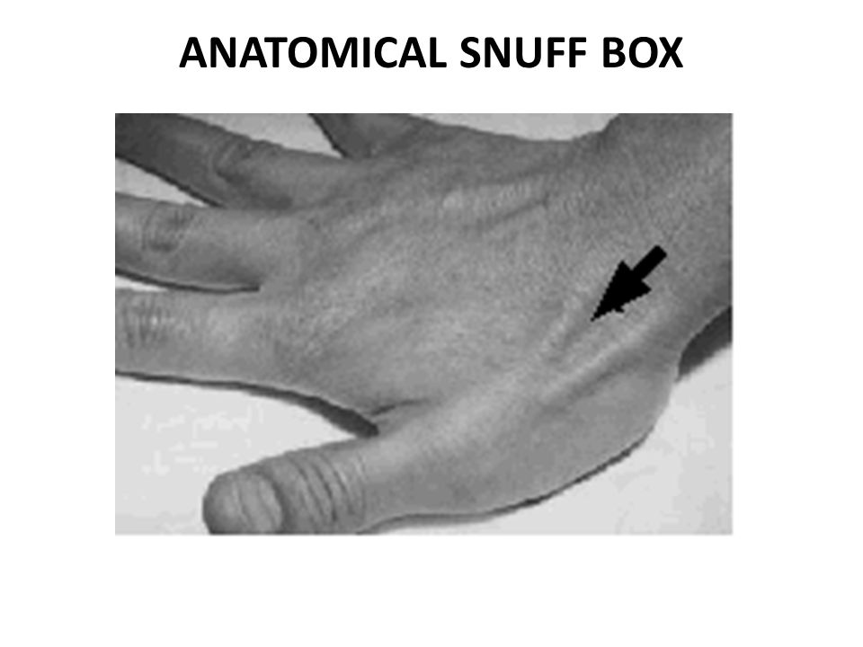ANATOMICAL SNUFF BOX
