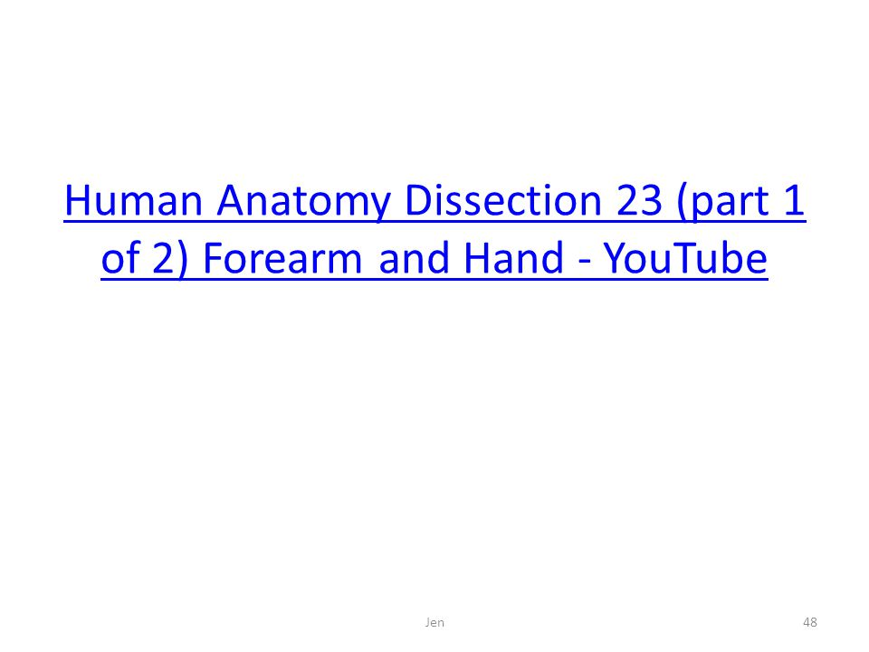 Human Anatomy Dissection 23 (part 1 of 2) Forearm and Hand - YouTube