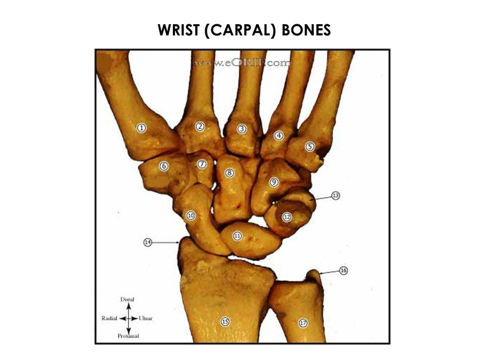 WRIST (CARPAL) BONES