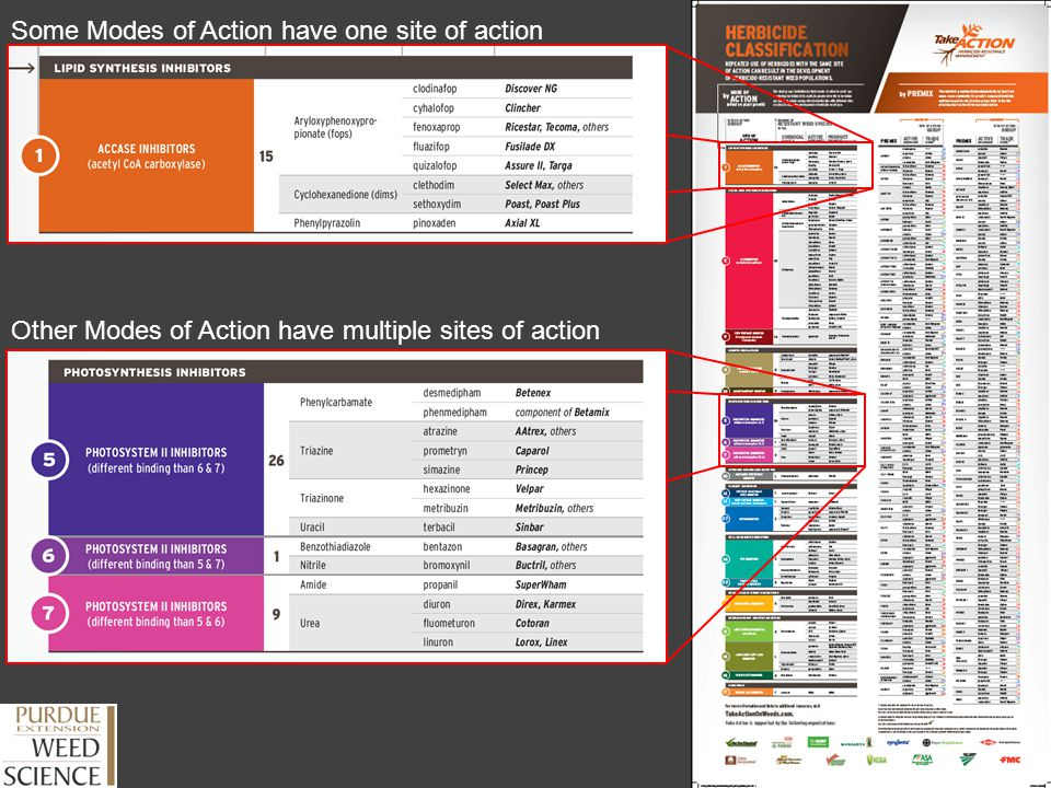 Some Modes of Action have one site of action
