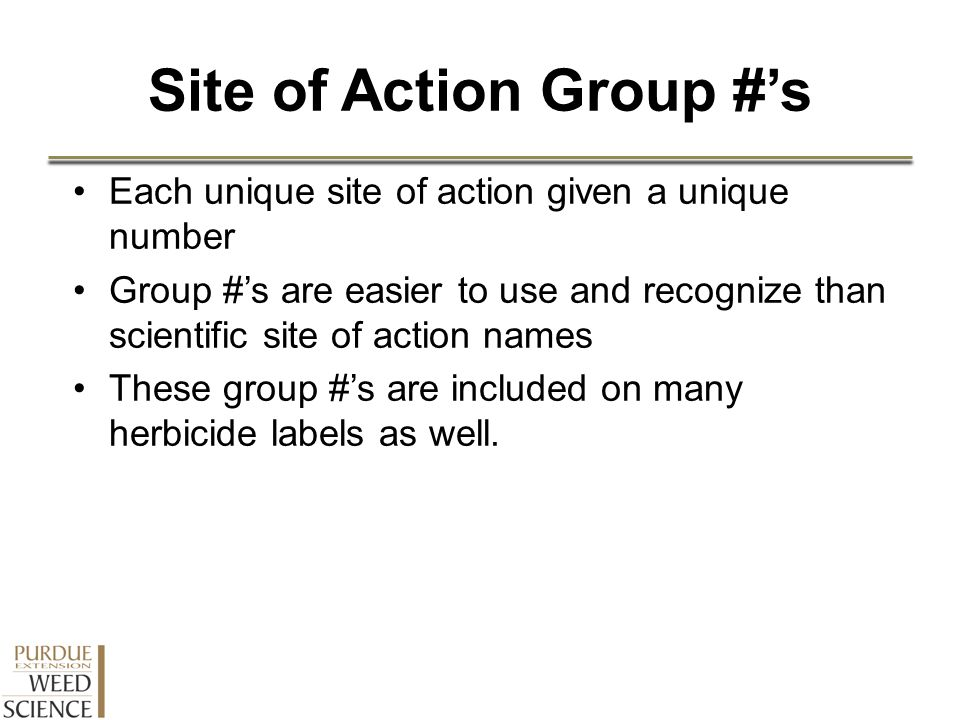 Site of Action Group #'s