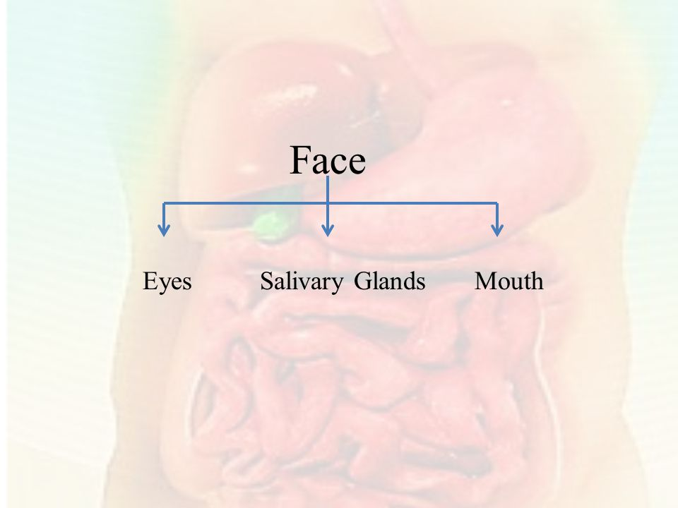 Face Eyes Salivary Glands Mouth