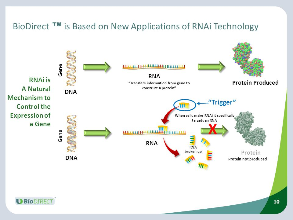 BioDirect ™ is Based on New Applications of RNAi Technology
