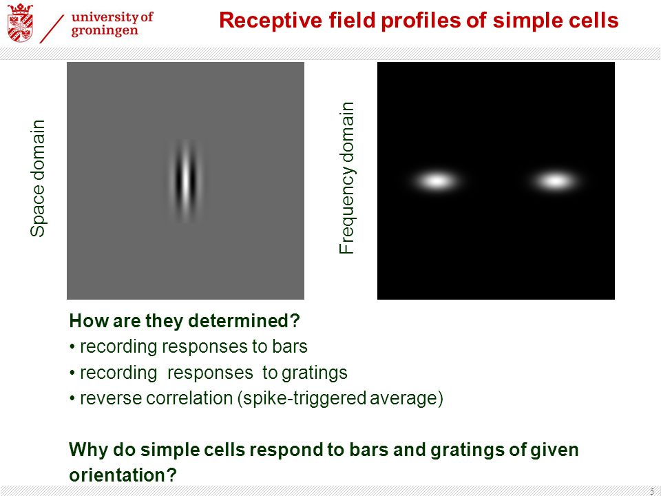Receptive field profiles of simple cells