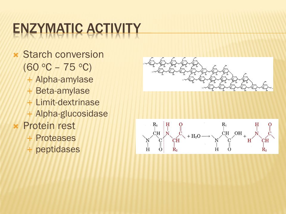 Enzymatic activity Starch conversion (60 oC – 75 oC) Protein rest