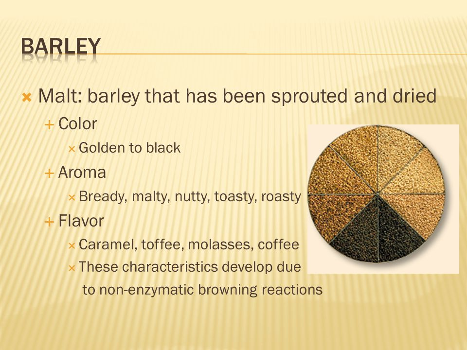 barley Malt: barley that has been sprouted and dried Color Aroma
