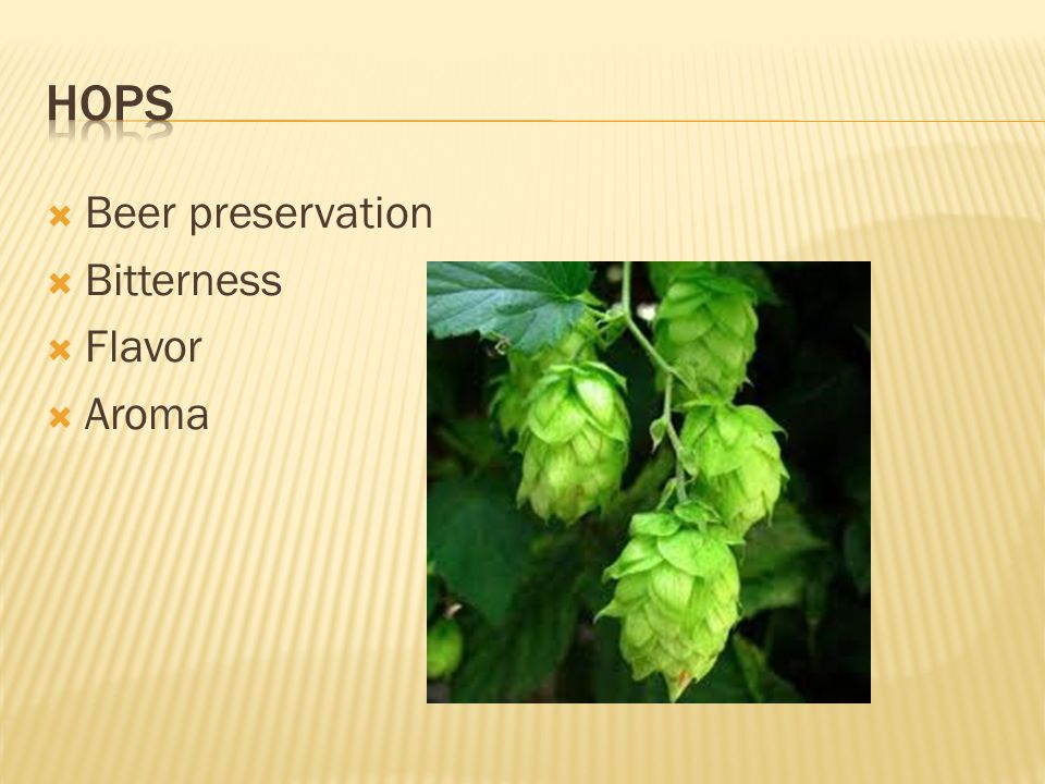 hops Beer preservation Bitterness Flavor Aroma