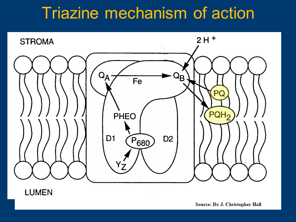 Triazine mechanism of action