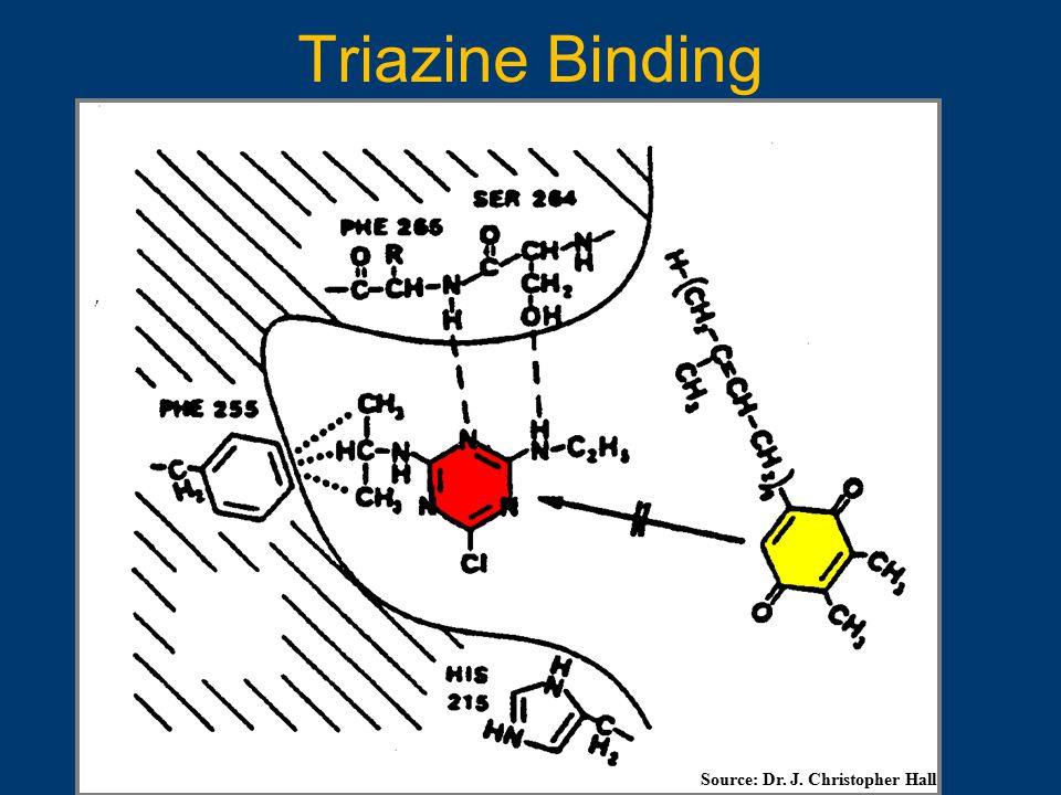 Triazine Binding Source: Dr. J. Christopher Hall