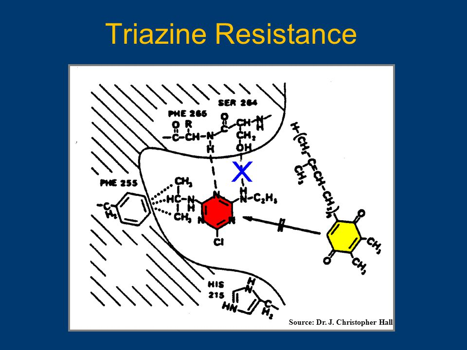 Triazine Resistance Source: Dr. J. Christopher Hall