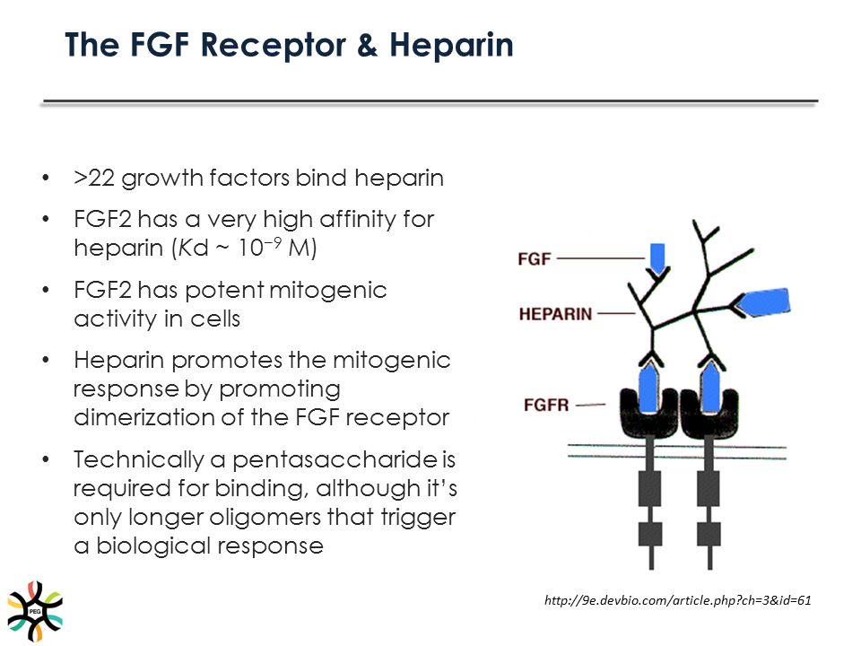 The FGF Receptor & Heparin