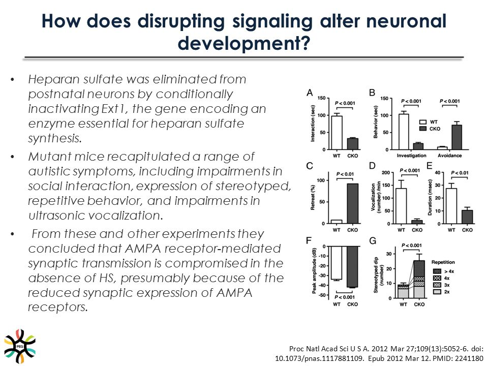 How does disrupting signaling alter neuronal development