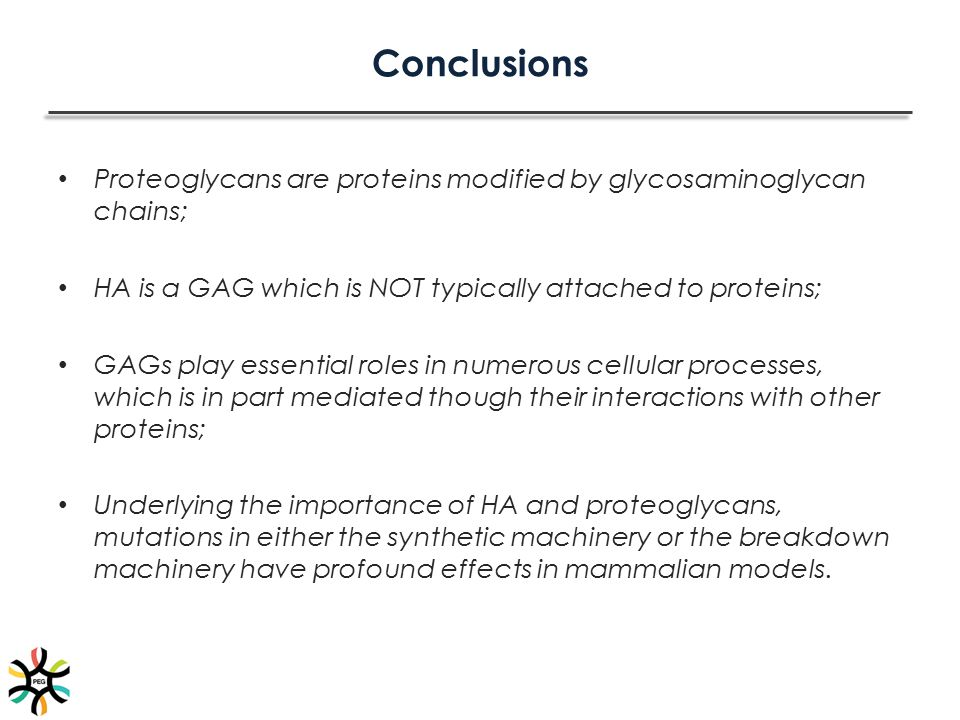 Conclusions Proteoglycans are proteins modified by glycosaminoglycan chains; HA is a GAG which is NOT typically attached to proteins;