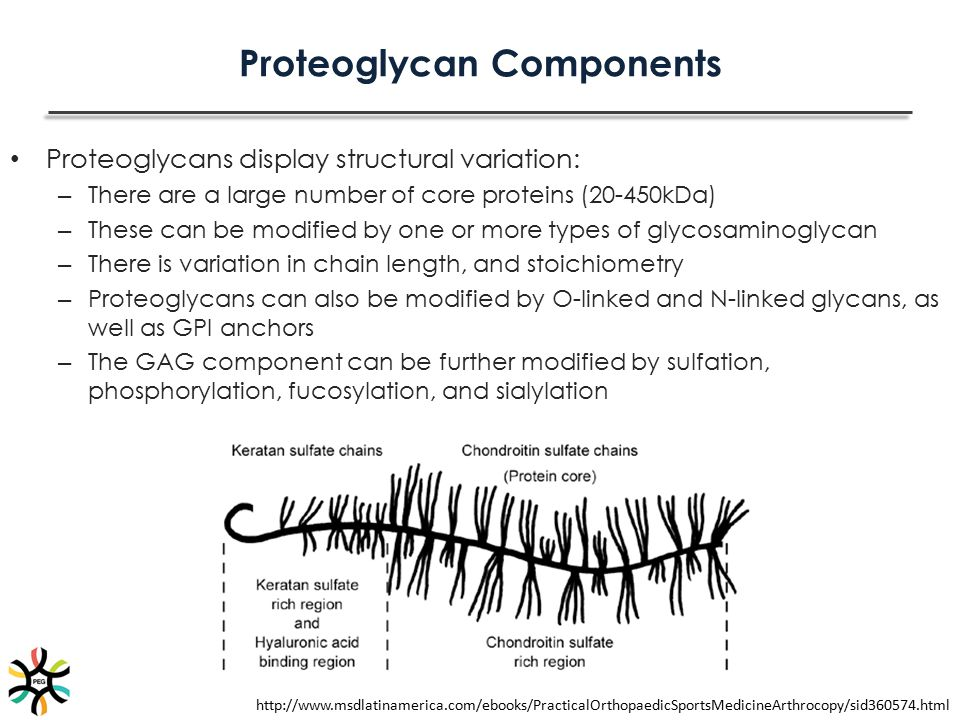 Proteoglycan Components
