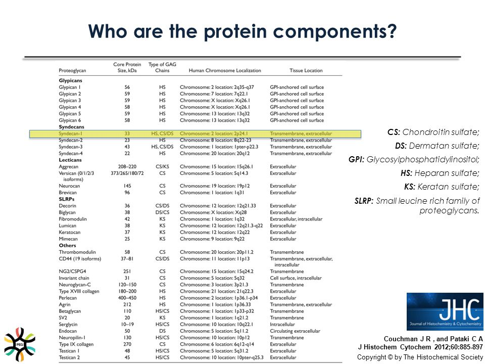 Who are the protein components