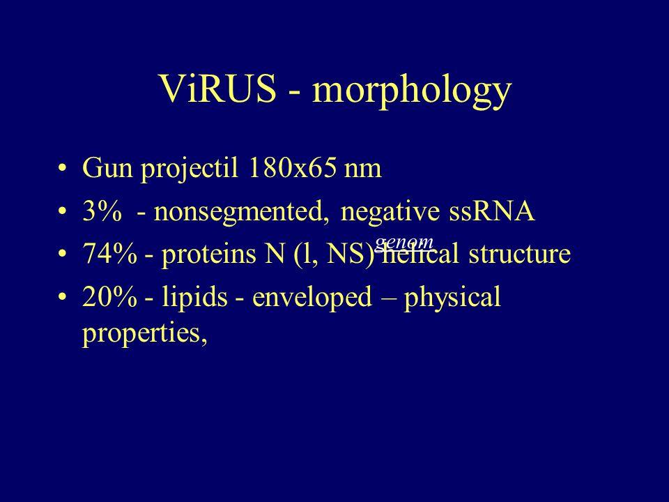 ViRUS - morphology Gun projectil 180x65 nm
