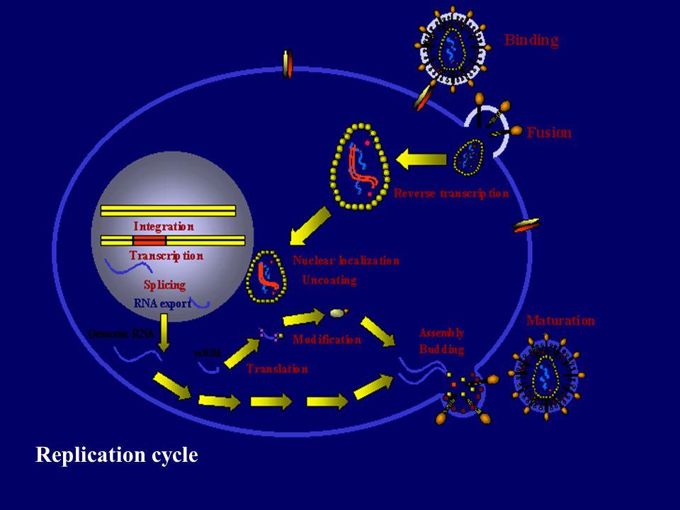 Replication cycle