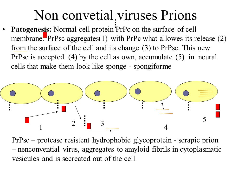 Non convetial viruses Prions