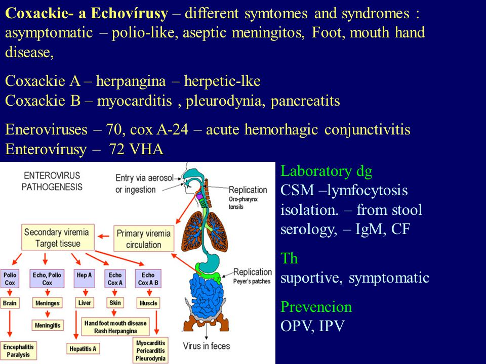 Coxackie- a Echovírusy – different symtomes and syndromes : asymptomatic – polio-like, aseptic meningitos, Foot, mouth hand disease,