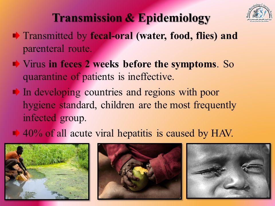Transmission & Epidemiology