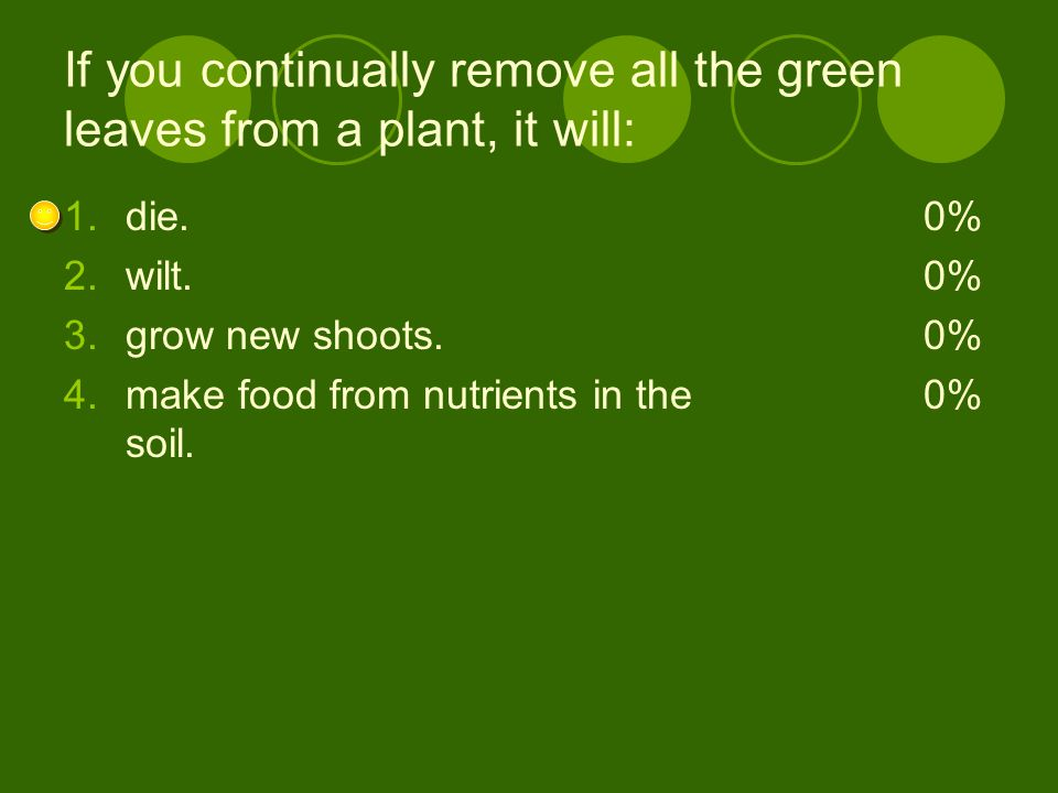 If you continually remove all the green leaves from a plant, it will: