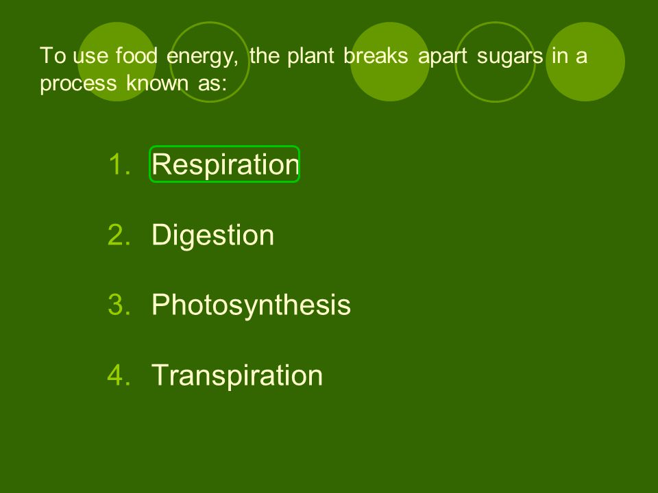Respiration Digestion Photosynthesis Transpiration
