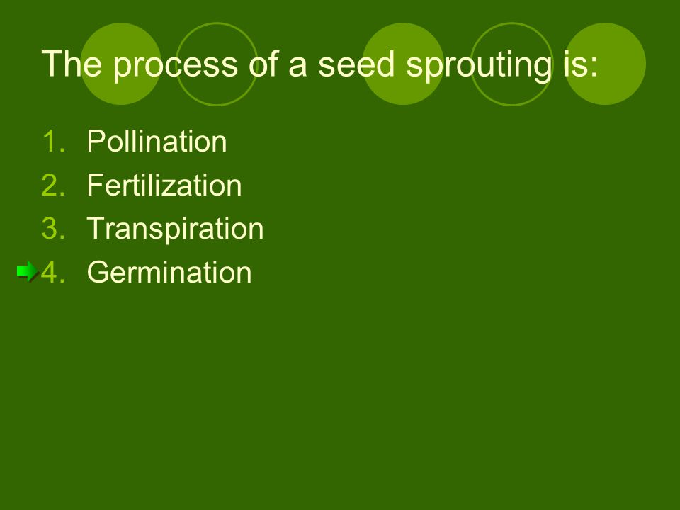 The process of a seed sprouting is: