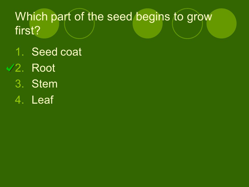Which part of the seed begins to grow first