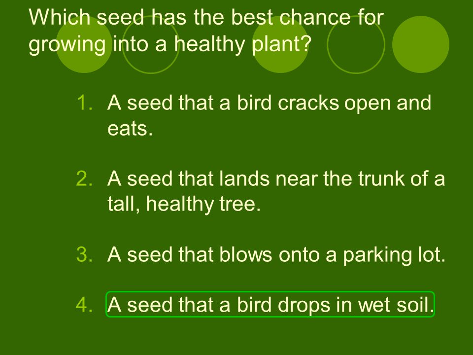 Which seed has the best chance for growing into a healthy plant