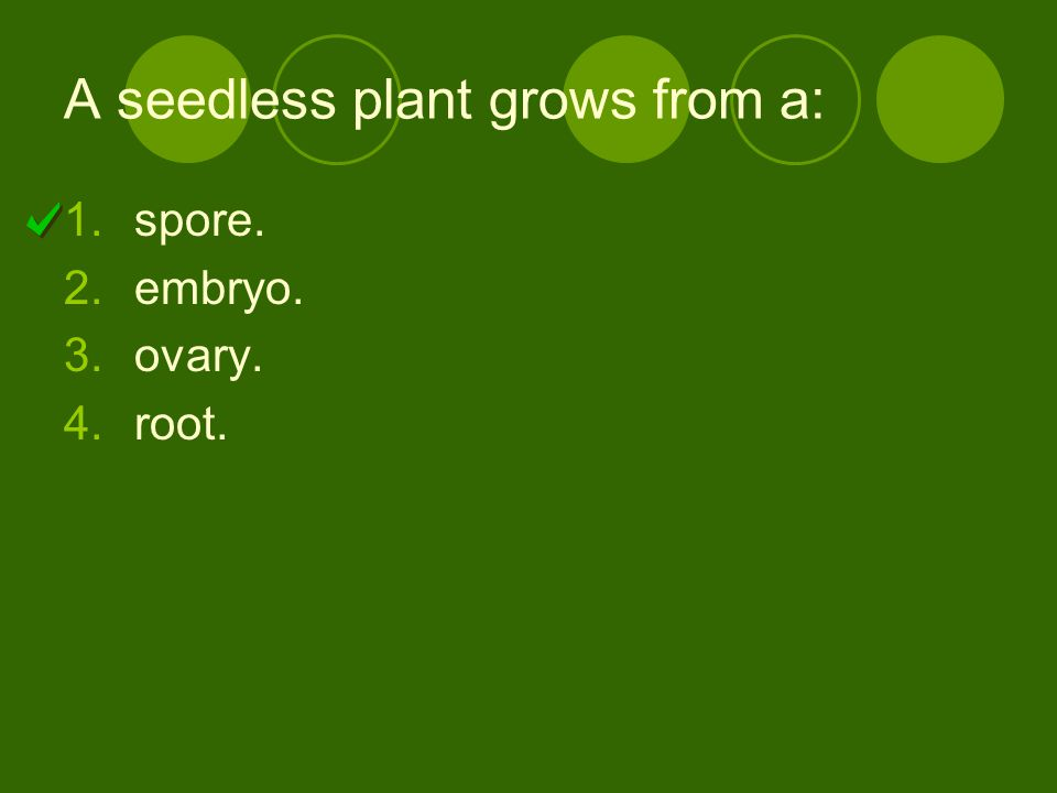 A seedless plant grows from a: