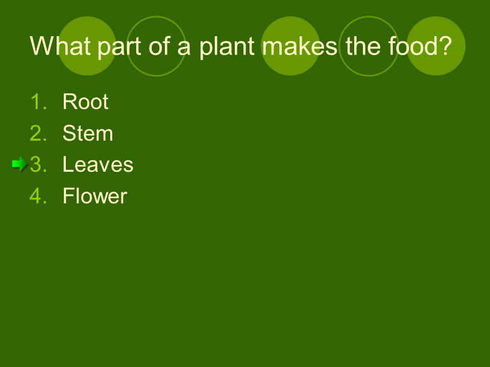 What part of a plant makes the food