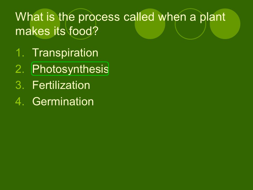 What is the process called when a plant makes its food