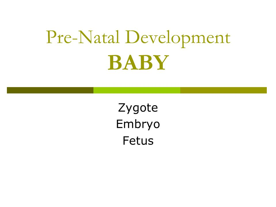 Pre-Natal Development BABY