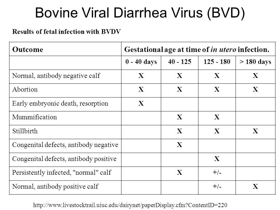 Bovine Viral Diarrhea Virus (BVD)