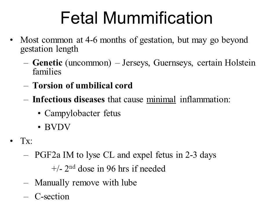 Fetal Mummification Most common at 4-6 months of gestation, but may go beyond gestation length.