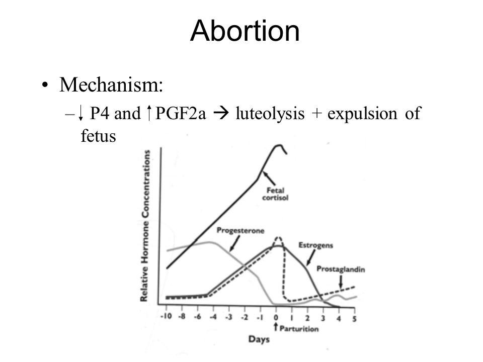 Abortion Mechanism: P4 and PGF2a  luteolysis + expulsion of fetus