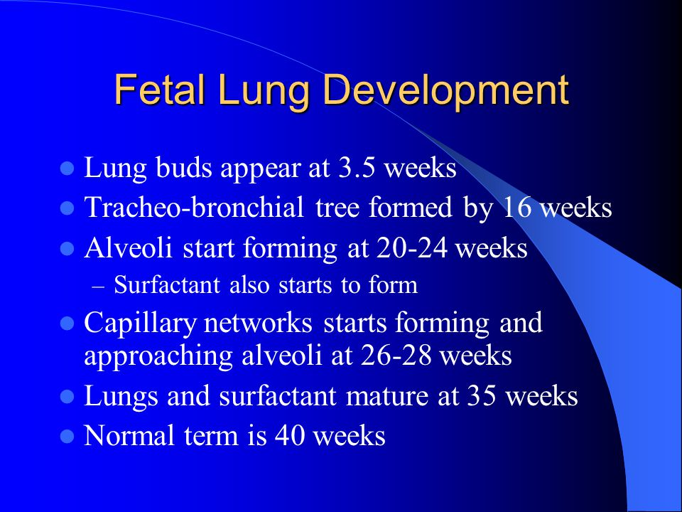 Fetal Lung Development