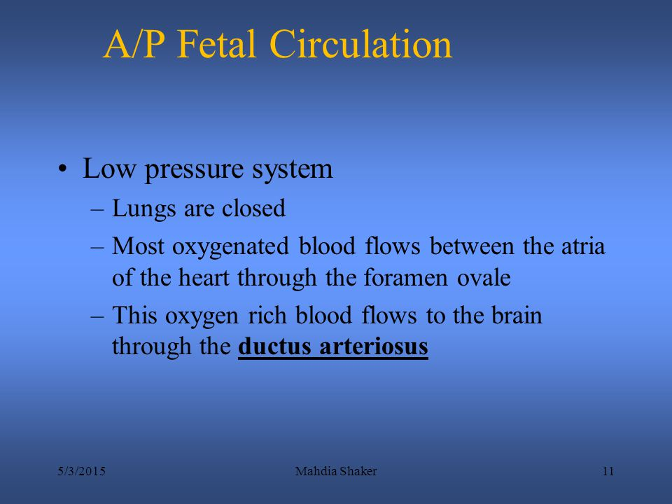 A/P Fetal Circulation Low pressure system Lungs are closed